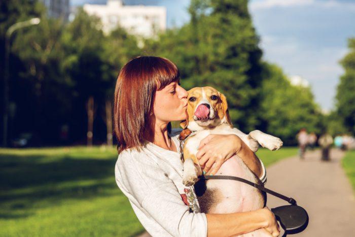 imagenes de beagle