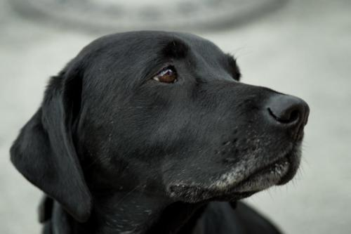 animal-canine-close-up-dog-332612