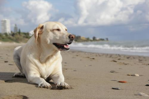 beach-sand-dog-animal-pet-mammal-1075839-pxhere.com