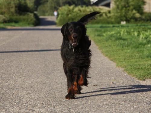 dog-4320959_1920