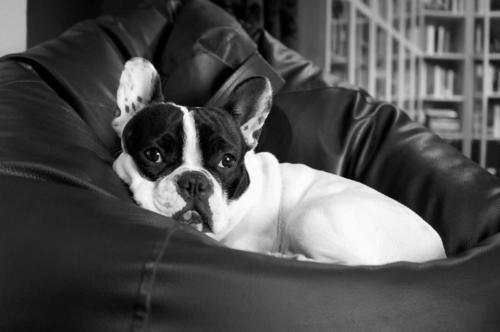 nature-black-and-white-white-puppy-dog-cute-1125668-pxhere.com