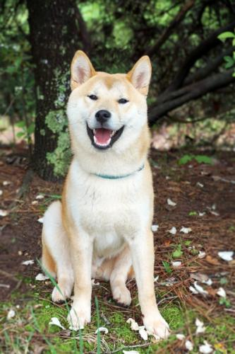 outdoor-white-dog-animal-cute-canine-1066120-pxhere.com