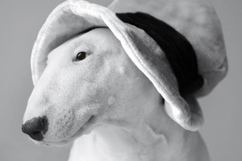 imagen de bull terrier