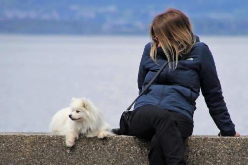 fotos de perritos pomerania