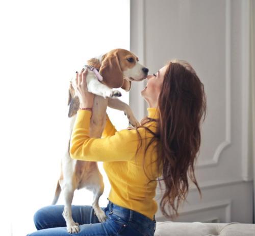imagenes de beagles cachorros